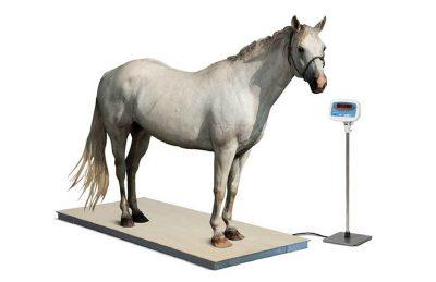 מאזניים לשקילת סוסים